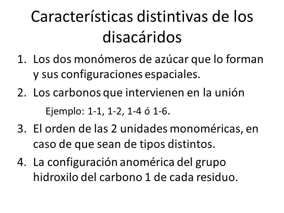 Características distintivas de los disacáridos