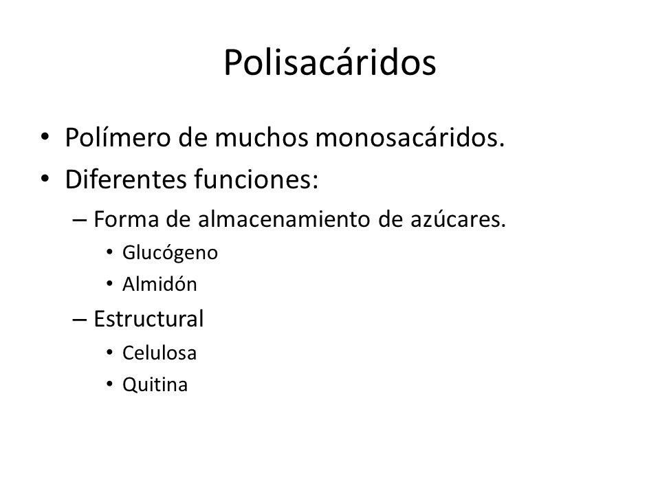 Polisacáridos Polímero de muchos monosacáridos. Diferentes funciones:
