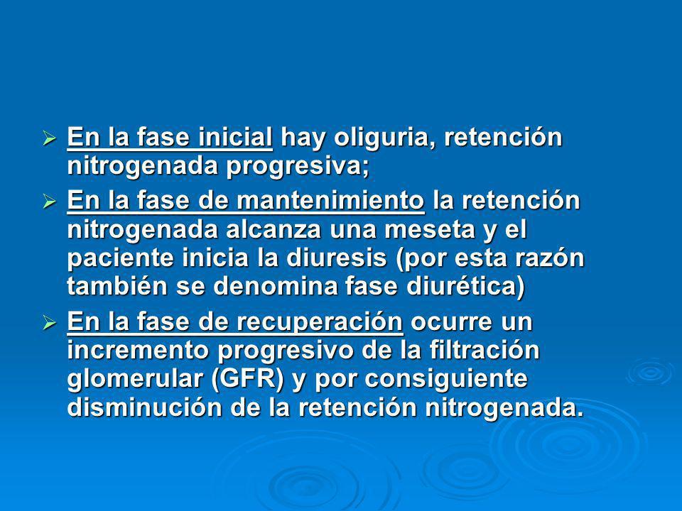 En la fase inicial hay oliguria, retención nitrogenada progresiva;