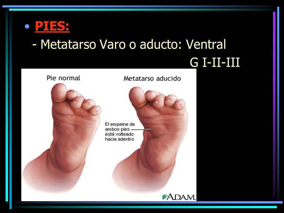 PIES: - Metatarso Varo o aducto: Ventral G I-II-III