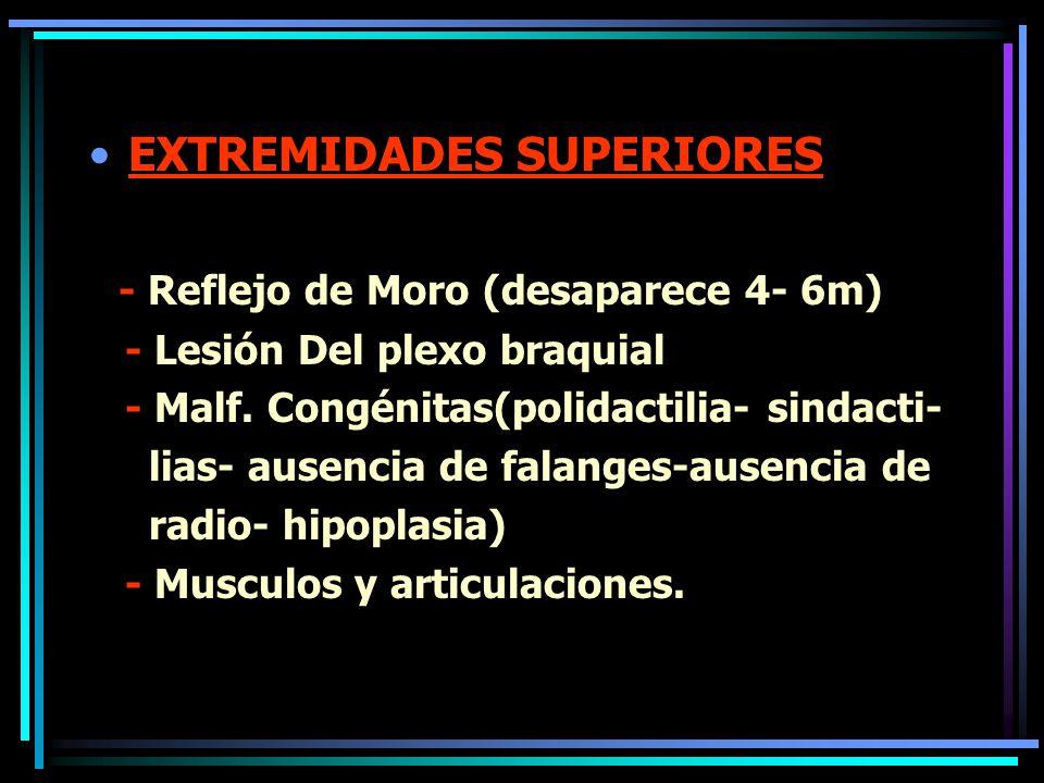 EXTREMIDADES SUPERIORES - Reflejo de Moro (desaparece 4- 6m)