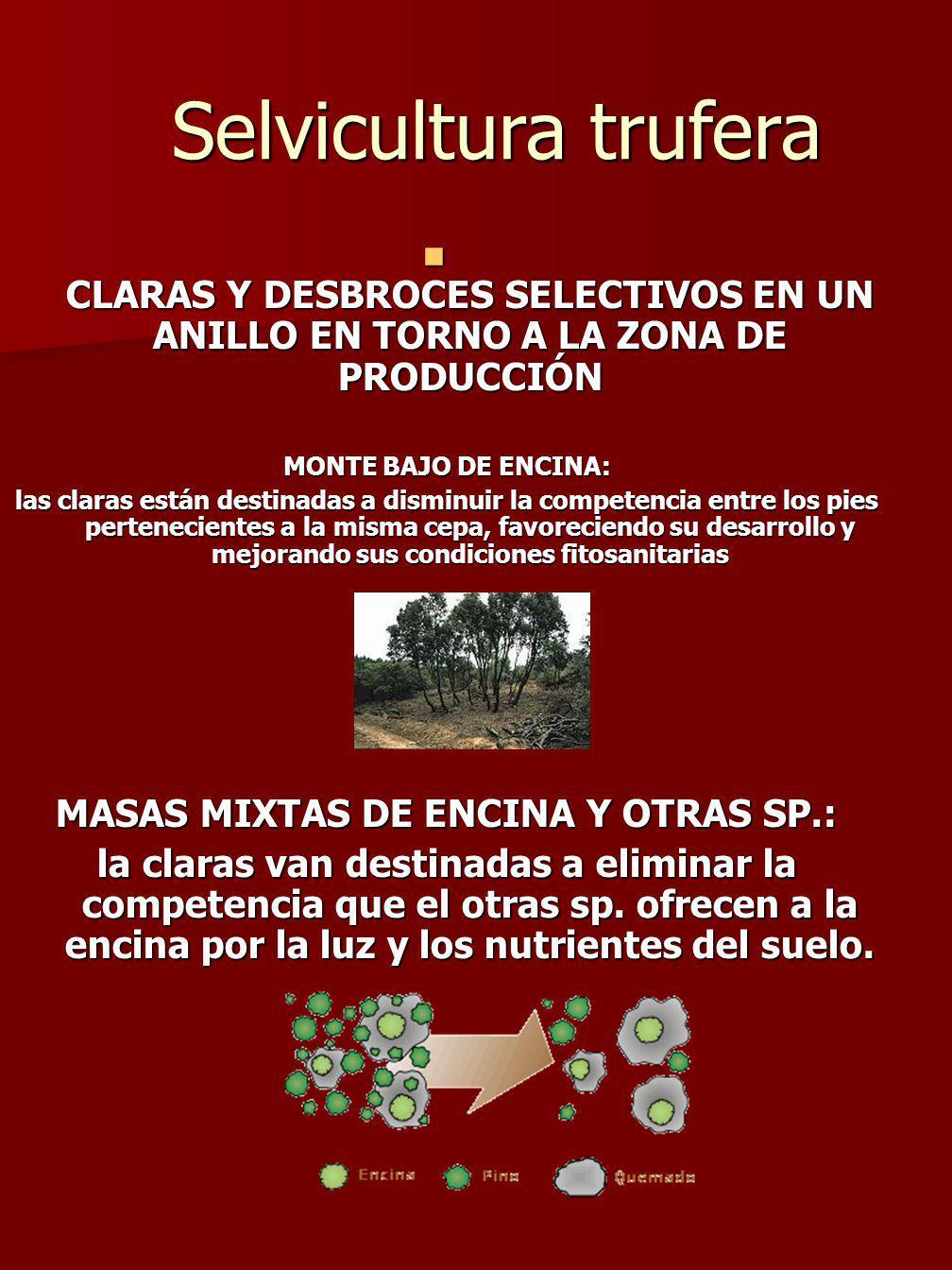 MASAS MIXTAS DE ENCINA Y OTRAS SP.: