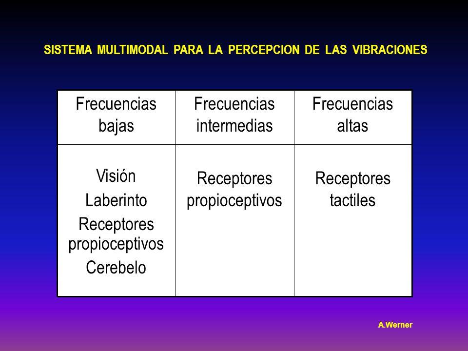 Receptores propioceptivos Cerebelo Frecuencias intermedias