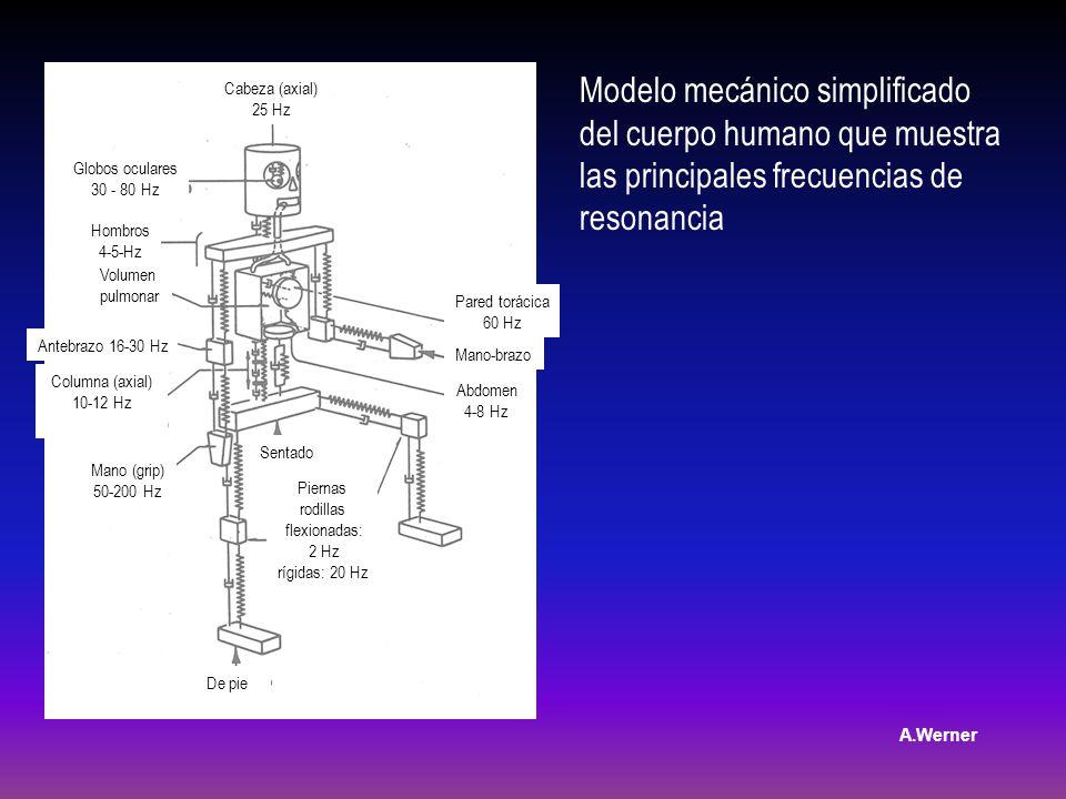 Modelo mecánico simplificado del cuerpo humano que muestra