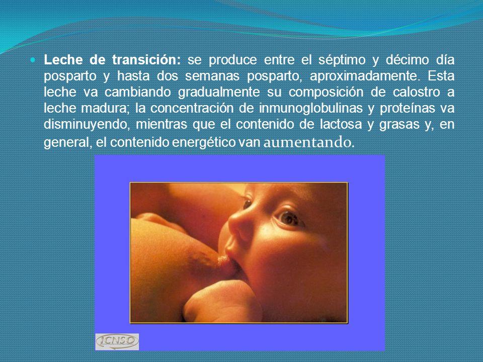 Leche de transición: se produce entre el séptimo y décimo día posparto y hasta dos semanas posparto, aproximadamente.