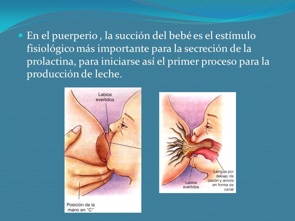 En el puerperio , la succión del bebé es el estímulo fisiológico más importante para la secreción de la prolactina, para iniciarse así el primer proceso para la producción de leche.
