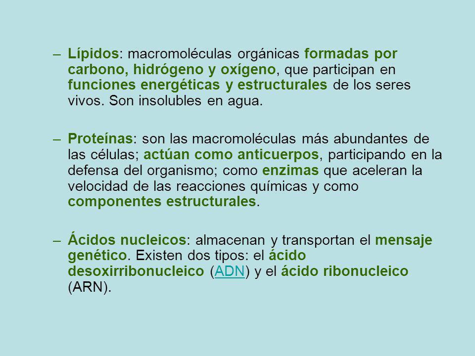 Lípidos: macromoléculas orgánicas formadas por carbono, hidrógeno y oxígeno, que participan en funciones energéticas y estructurales de los seres vivos. Son insolubles en agua.