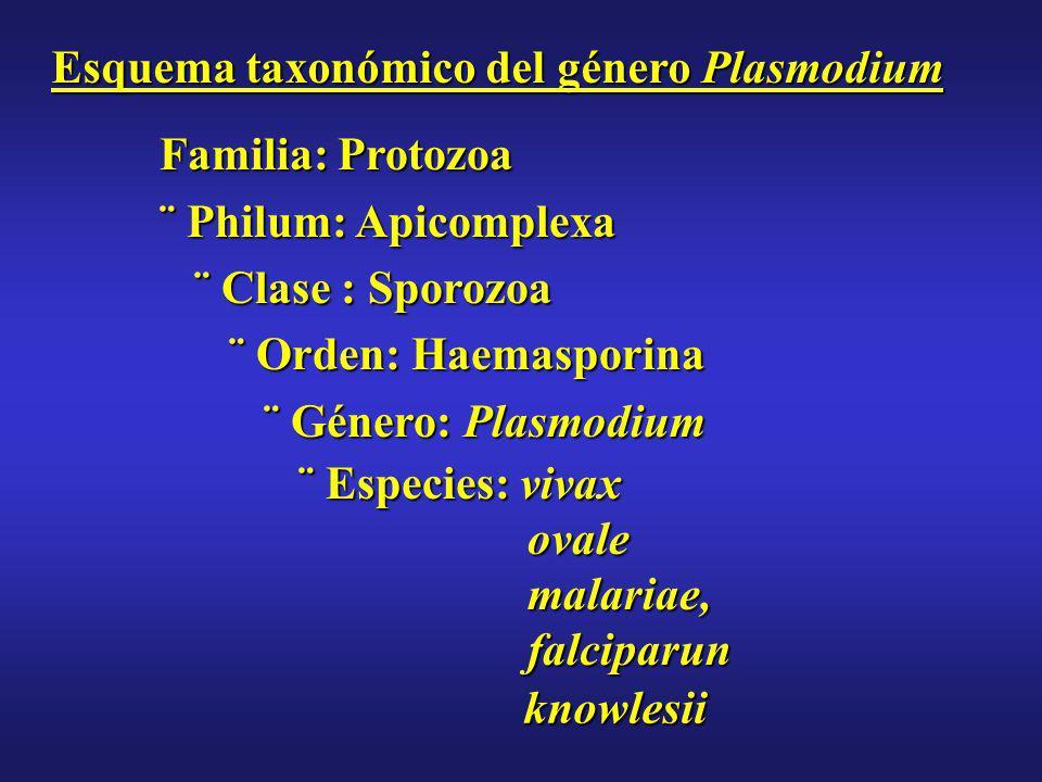 Esquema taxonómico del género Plasmodium