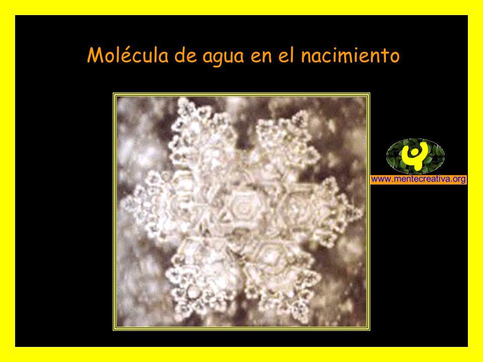 Molécula de agua en el nacimiento