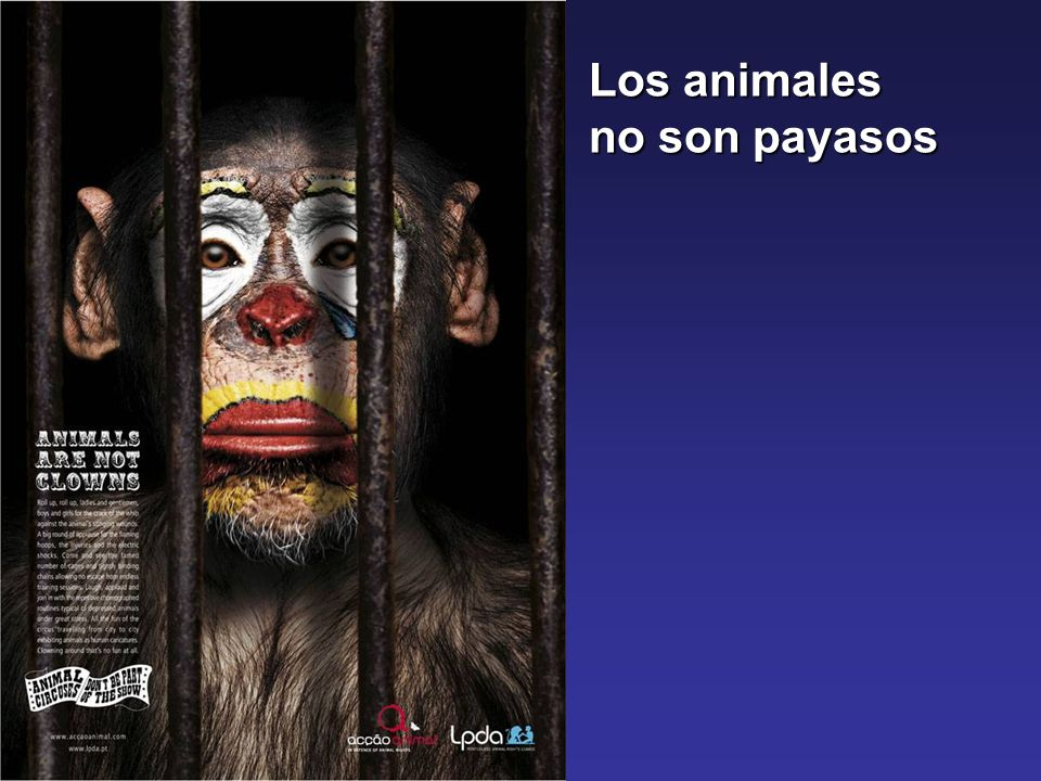 Los animales no son payasos