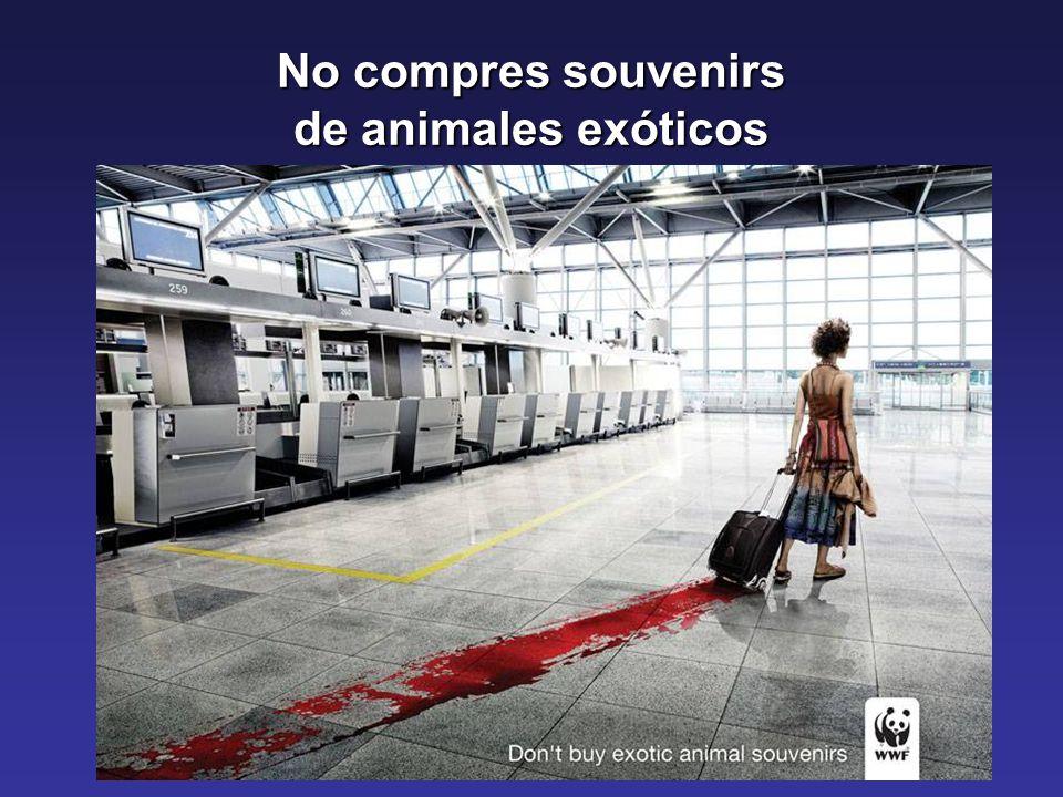 No compres souvenirs de animales exóticos