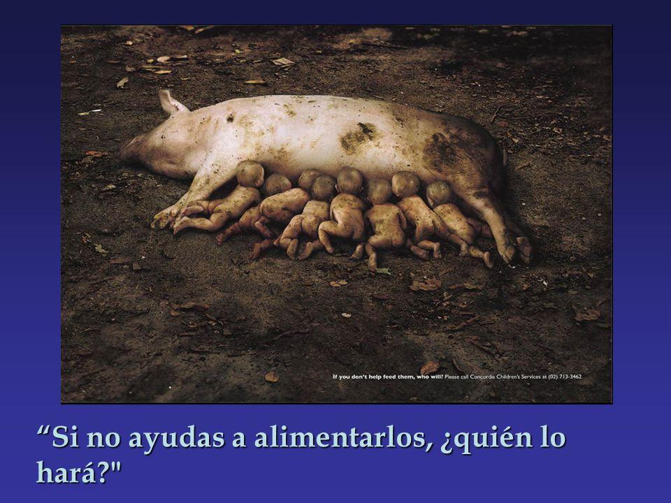 Si no ayudas a alimentarlos, ¿quién lo hará