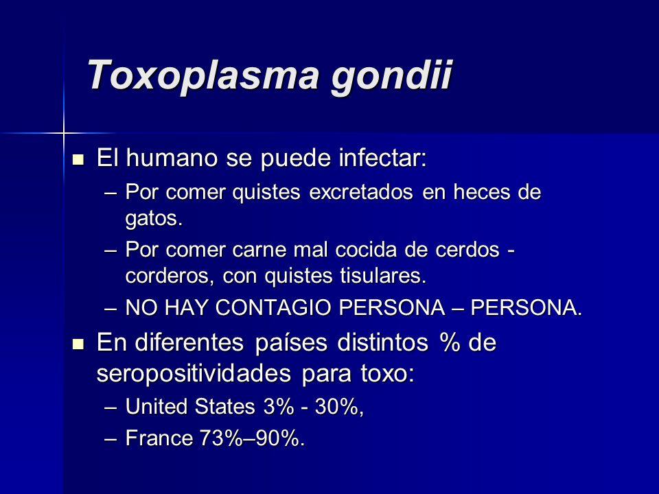 Toxoplasma gondii El humano se puede infectar: