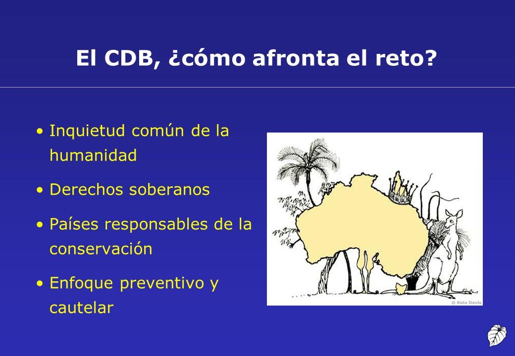El CDB, ¿cómo afronta el reto