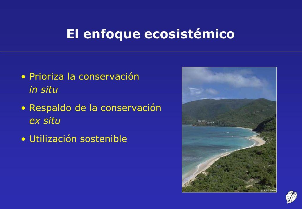 El enfoque ecosistémico