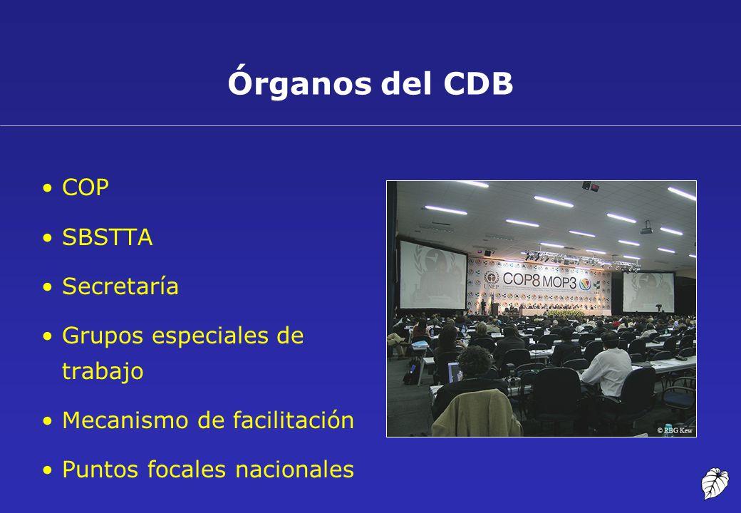Órganos del CDB COP SBSTTA Secretaría Grupos especiales de trabajo