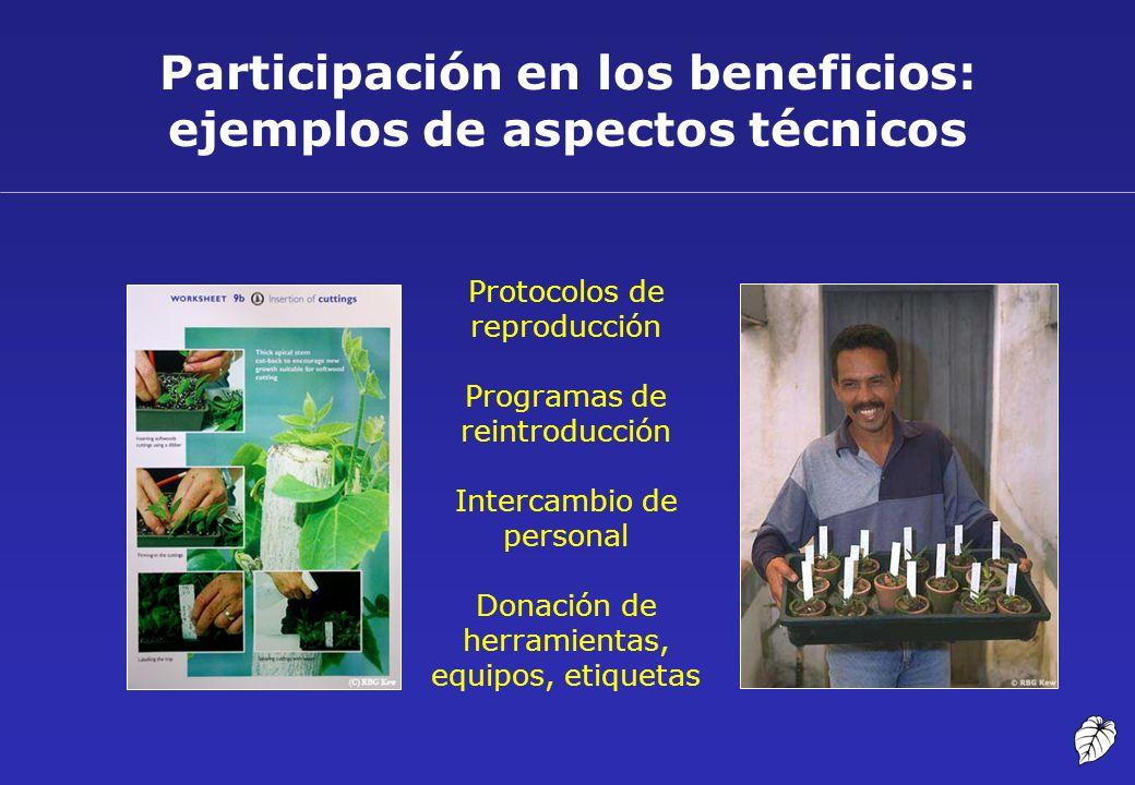 Participación en los beneficios: ejemplos de aspectos técnicos