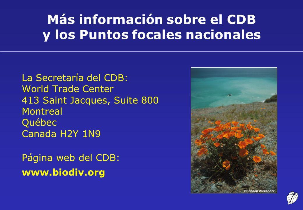Más información sobre el CDB y los Puntos focales nacionales