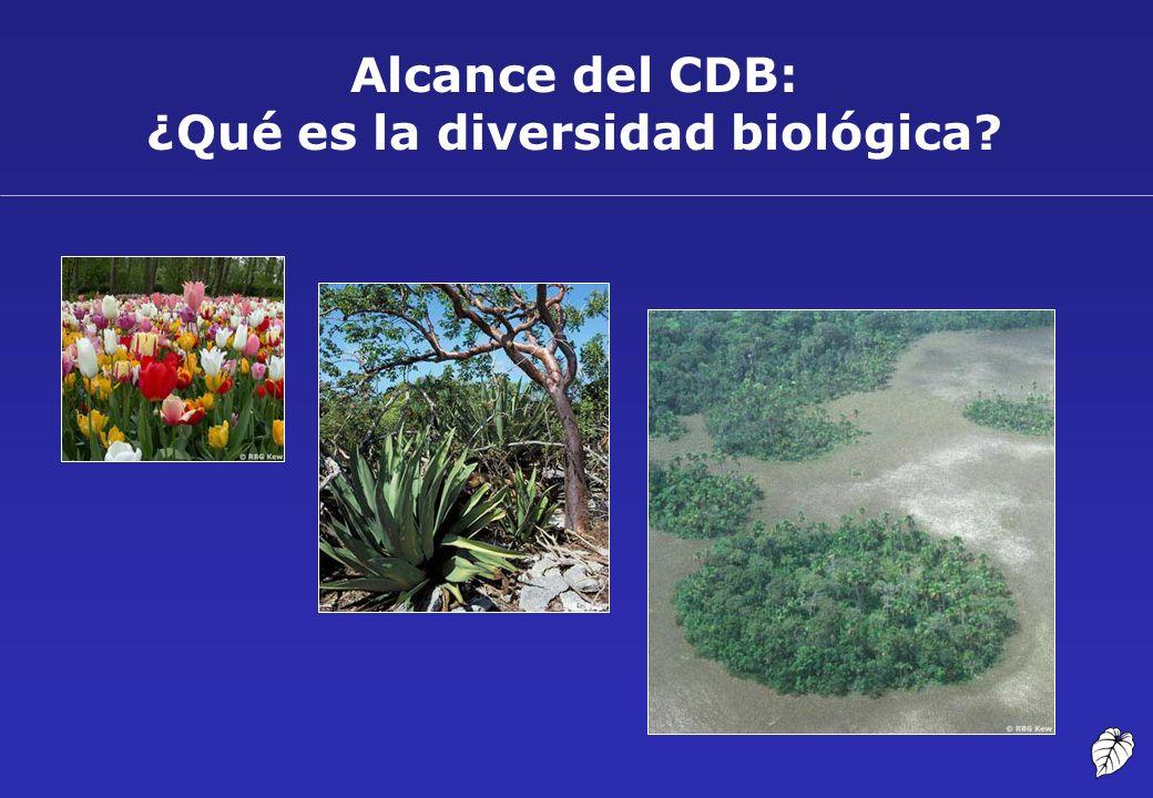 Alcance del CDB: ¿Qué es la diversidad biológica