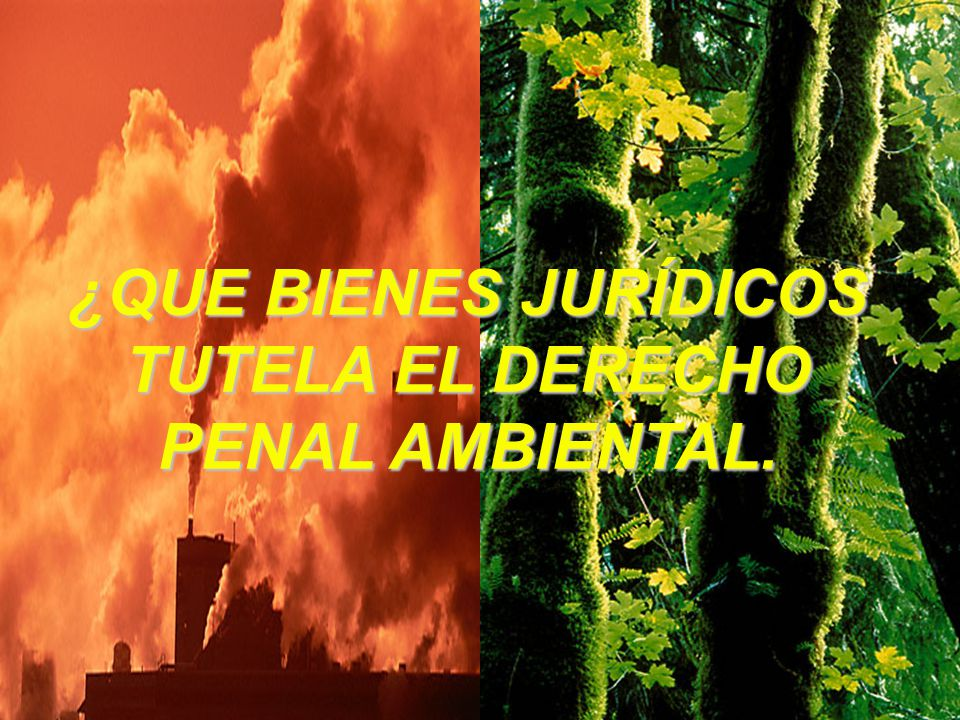 ¿QUE BIENES JURÍDICOS TUTELA EL DERECHO PENAL AMBIENTAL.