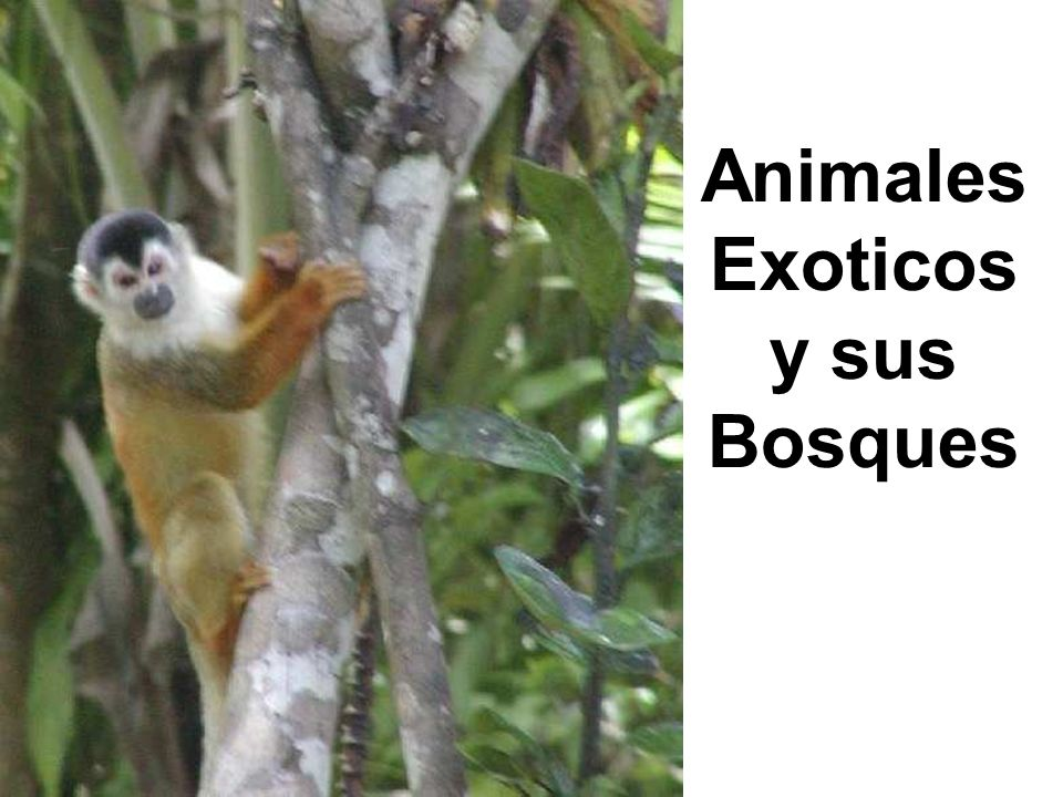 Animales Exoticos y sus Bosques