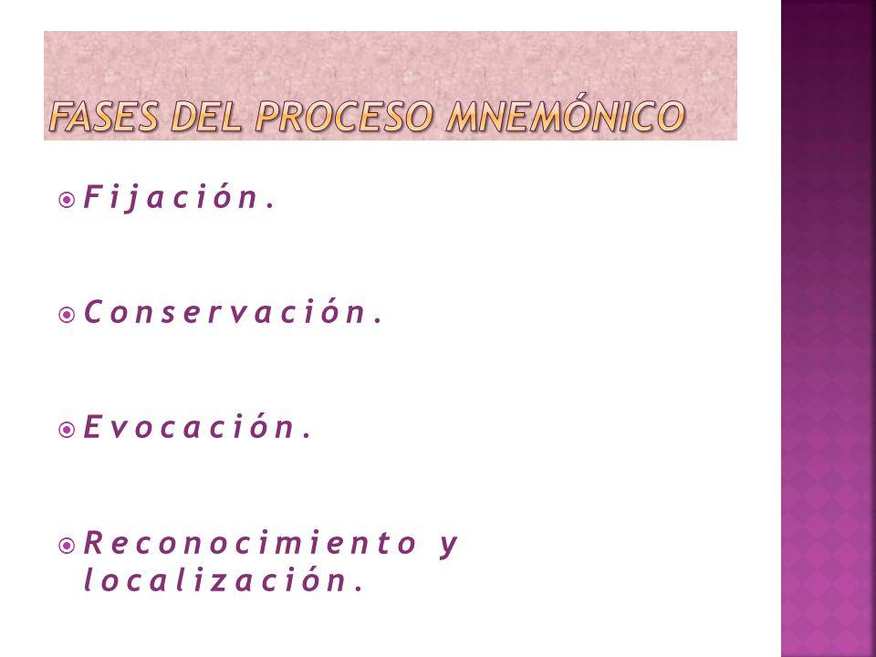 Fases del proceso mnemónico