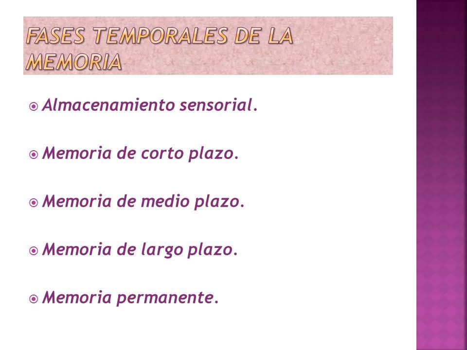 Fases temporales de la memoria