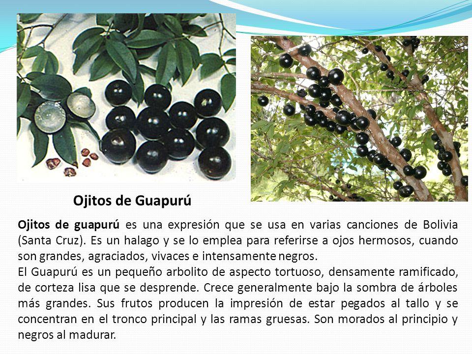 Ojitos de Guapurú