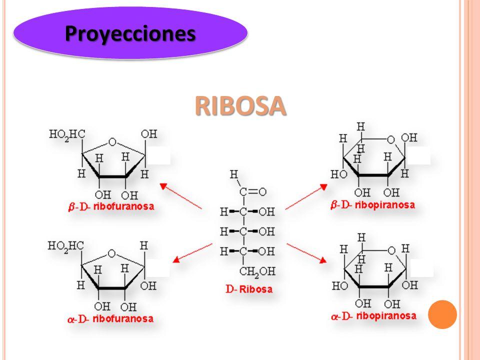 Proyecciones RIBOSA
