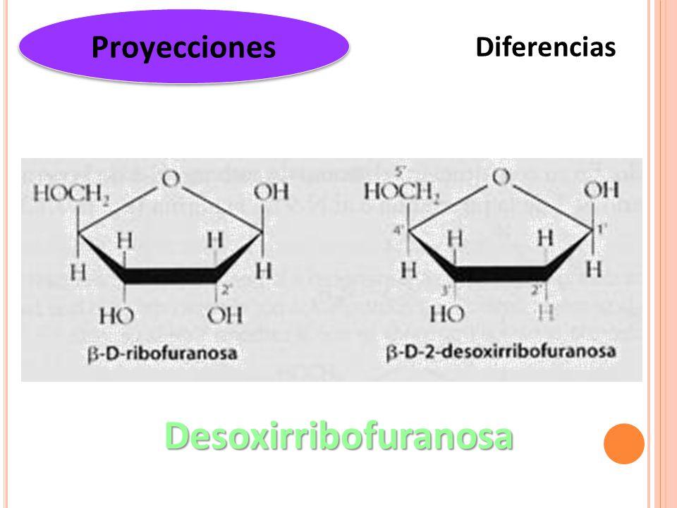 Diferencias Proyecciones Desoxirribofuranosa