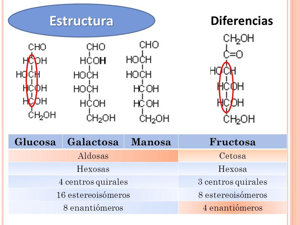 Estructura Diferencias Glucosa Galactosa Manosa Fructosa Aldosas
