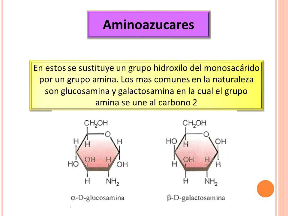 Aminoazucares
