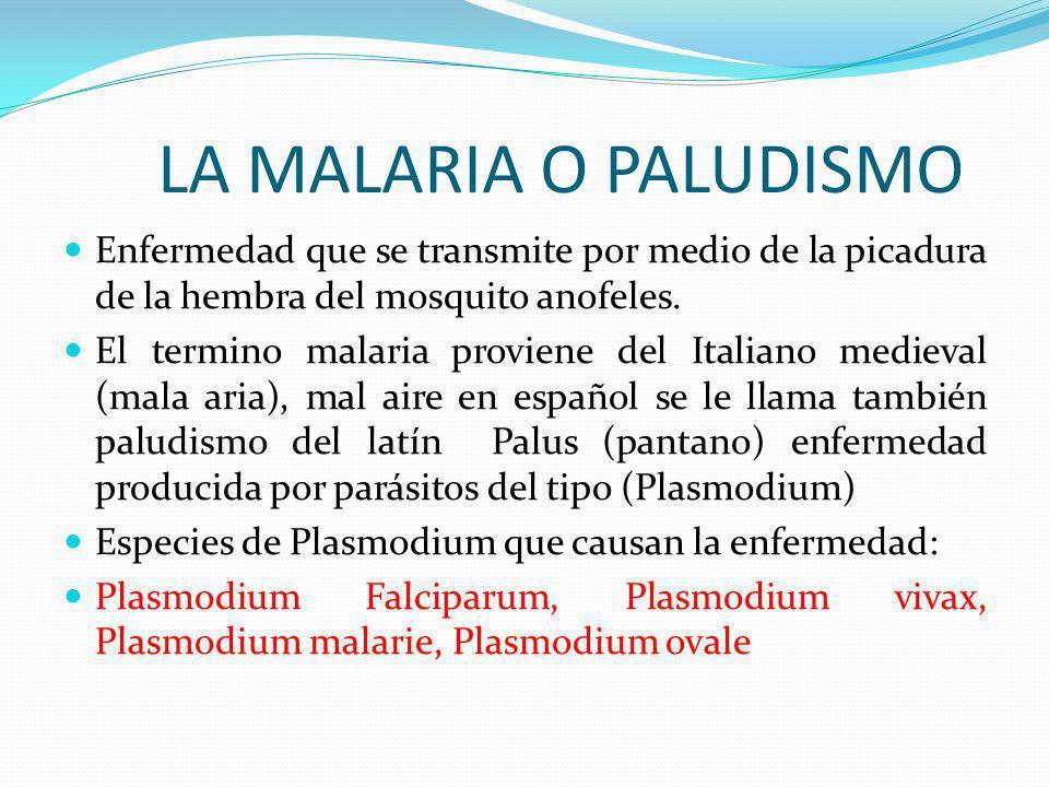 LA MALARIA O PALUDISMO Enfermedad que se transmite por medio de la picadura de la hembra del mosquito anofeles.