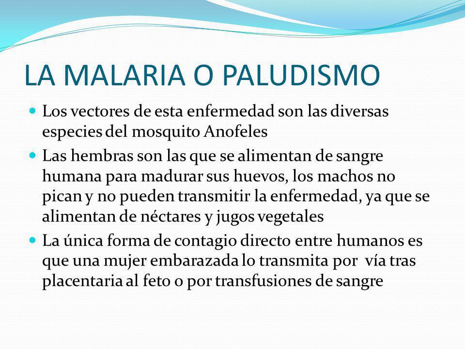 LA MALARIA O PALUDISMO Los vectores de esta enfermedad son las diversas especies del mosquito Anofeles.