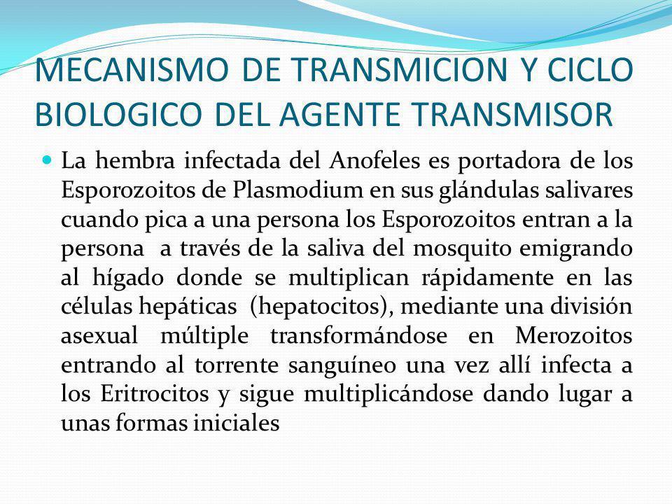 MECANISMO DE TRANSMICION Y CICLO BIOLOGICO DEL AGENTE TRANSMISOR