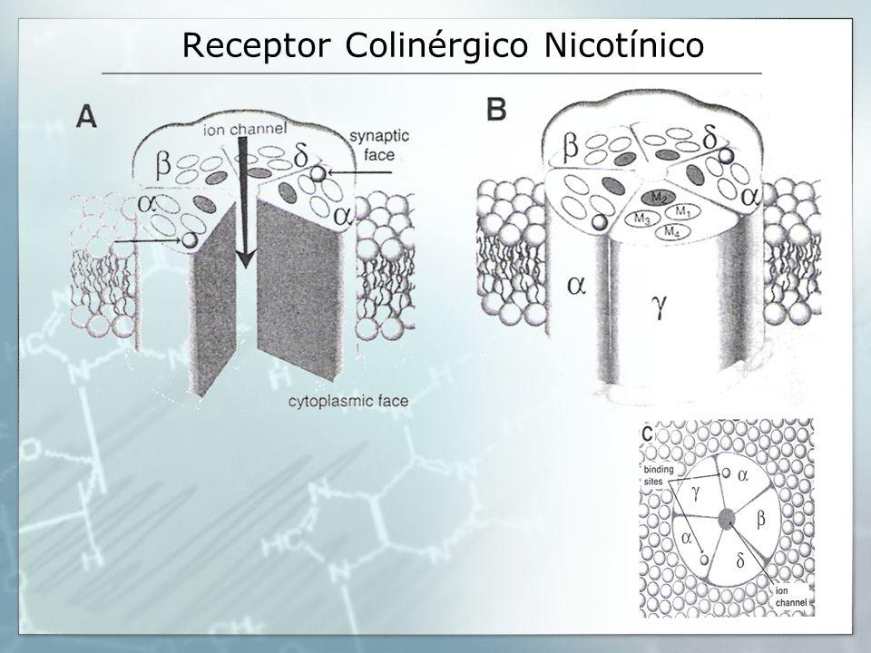 Receptor Colinérgico Nicotínico