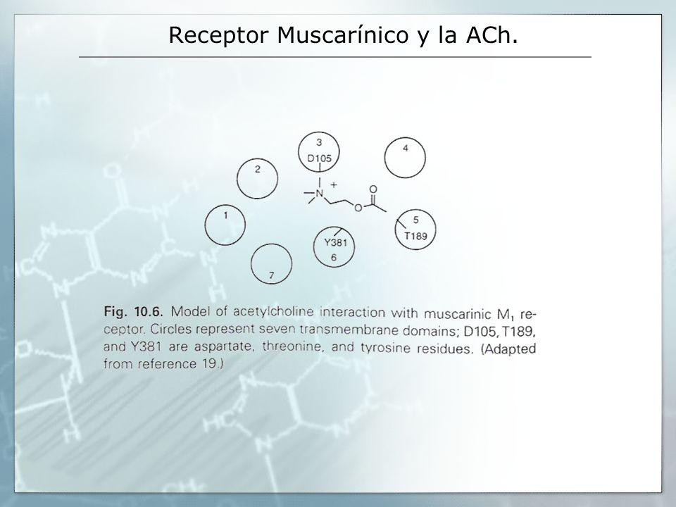 Receptor Muscarínico y la ACh.