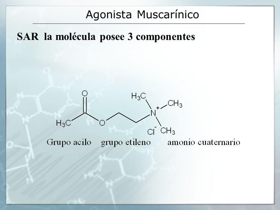 Agonista Muscarínico SAR la molécula posee 3 componentes