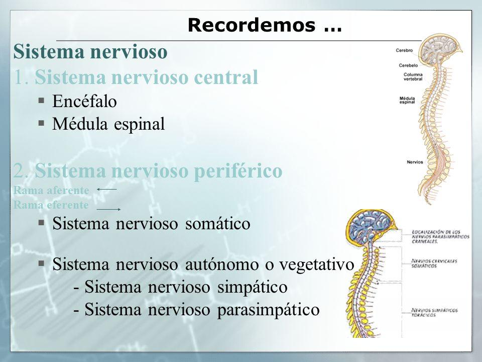 1. Sistema nervioso central