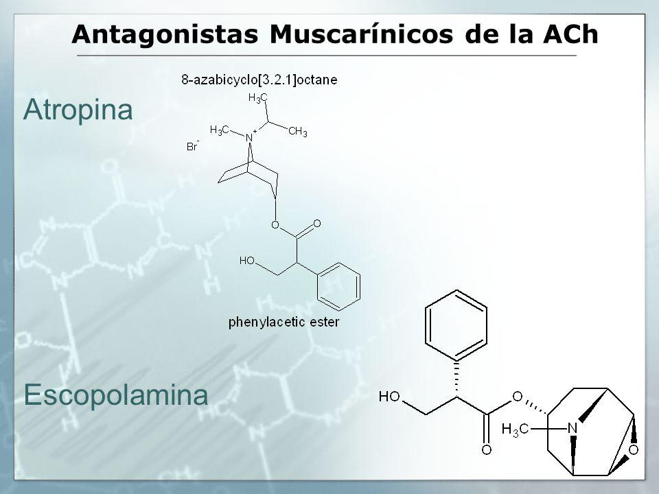 Antagonistas Muscarínicos de la ACh