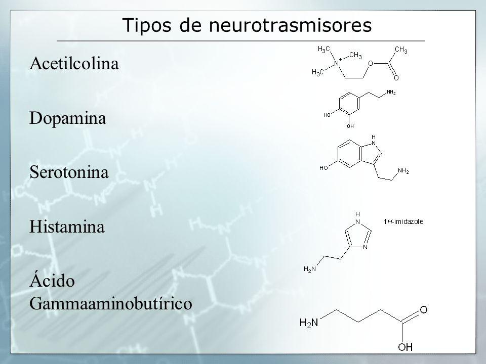 Tipos de neurotrasmisores
