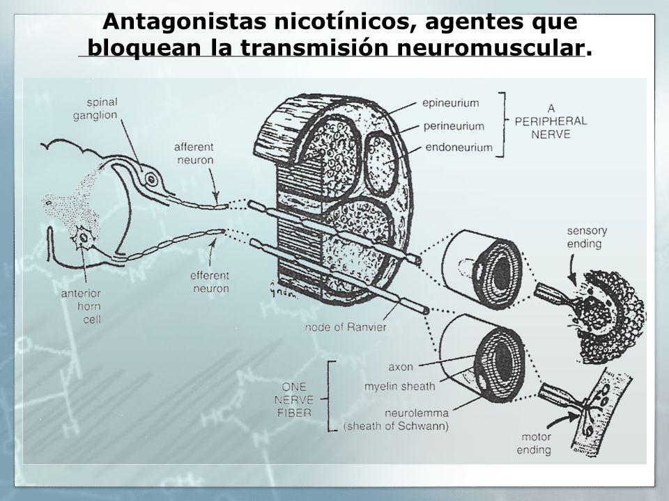 Antagonistas nicotínicos, agentes que bloquean la transmisión neuromuscular.