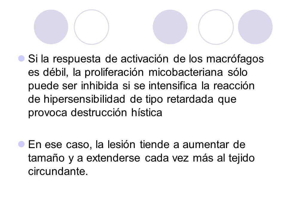 Si la respuesta de activación de los macrófagos es débil, la proliferación micobacteriana sólo puede ser inhibida si se intensifica la reacción de hipersensibilidad de tipo retardada que provoca destrucción hística