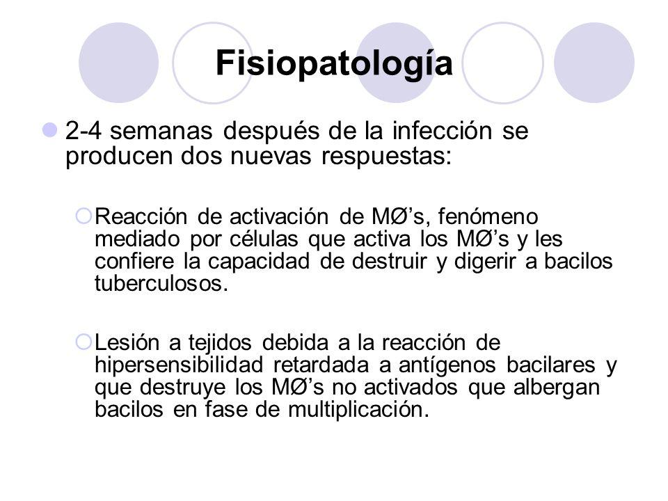 Fisiopatología2-4 semanas después de la infección se producen dos nuevas respuestas: