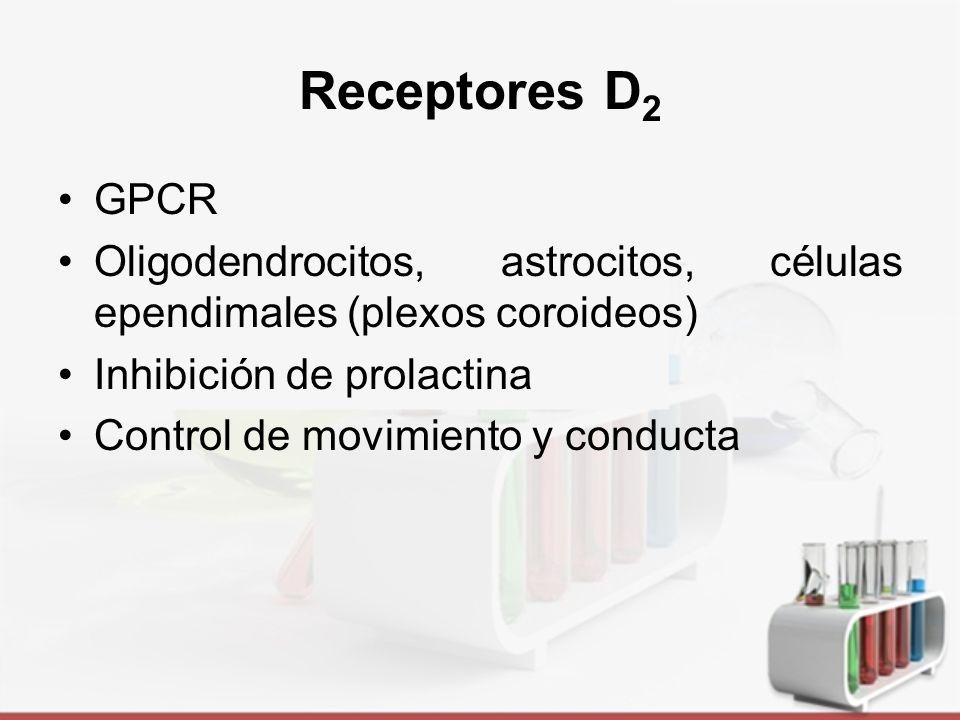 Receptores D2 GPCR. Oligodendrocitos, astrocitos, células ependimales (plexos coroideos) Inhibición de prolactina.