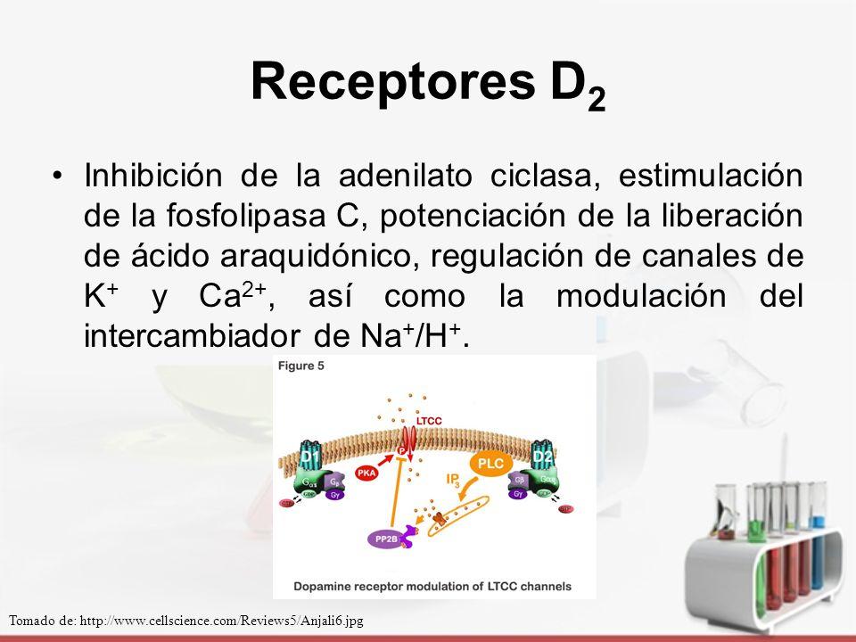Receptores D2