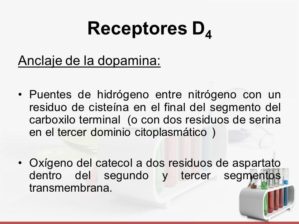 Receptores D4 Anclaje de la dopamina: