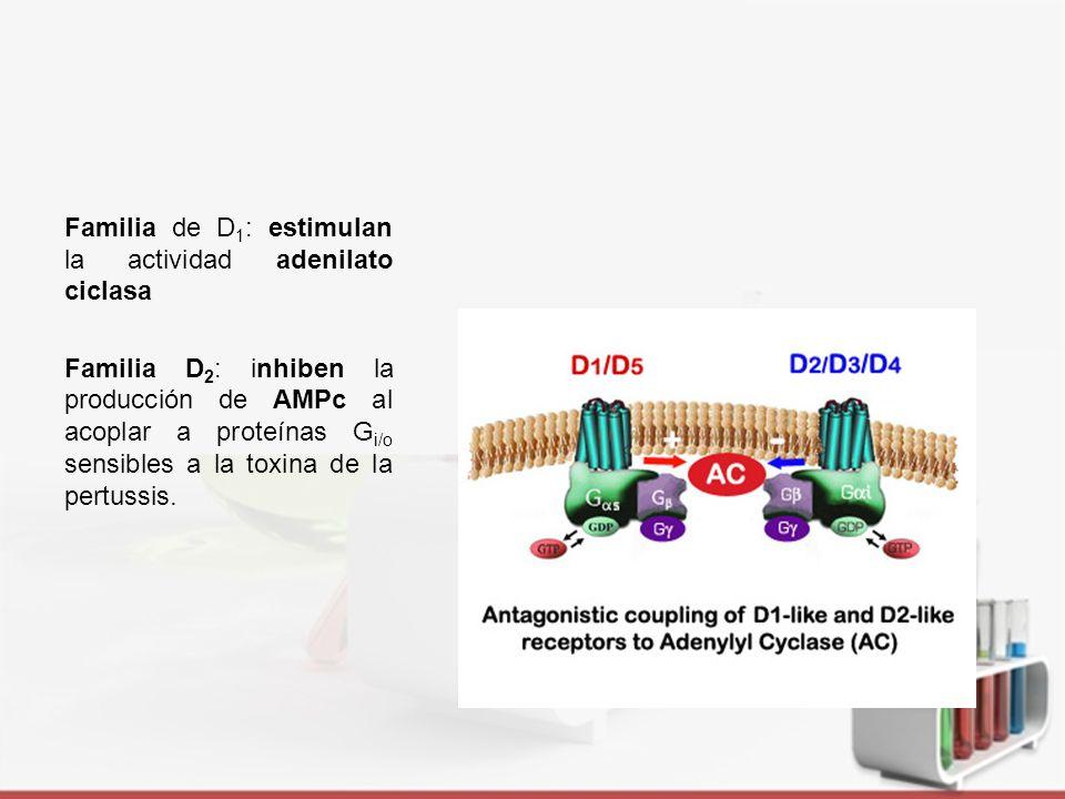 Familia de D1: estimulan la actividad adenilato ciclasa