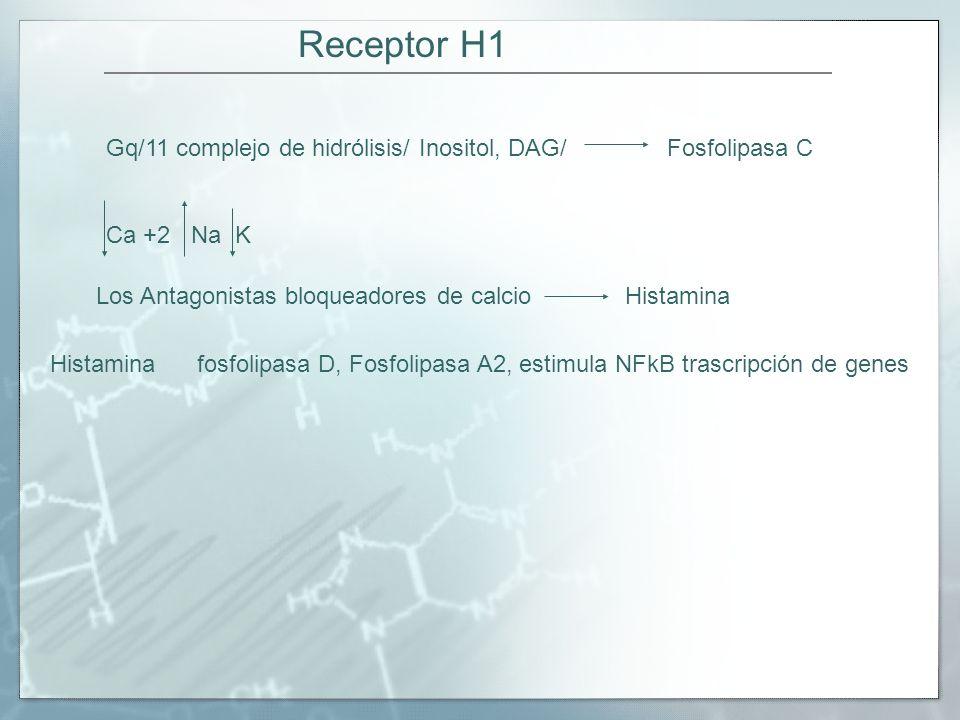 Receptor H1 Gq/11 complejo de hidrólisis/ Inositol, DAG/ Fosfolipasa C
