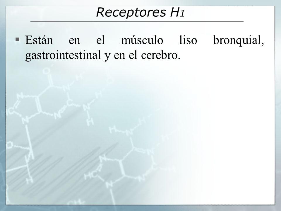 Receptores H1 Están en el músculo liso bronquial, gastrointestinal y en el cerebro.